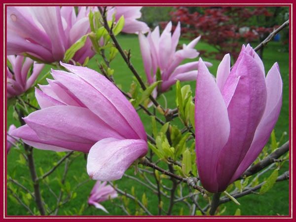 Magnolia Farbe war schöne ideen für ihr haus design ideen